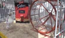 Fantastic Delites: Delite-o-matic, Mouse Wheel Run – Scheda