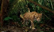 National Geographic: Jungle – Scheda